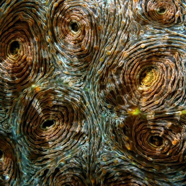 Fascinating-Macro-Shots-of-Underwater-Coral_1-640x640