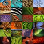 Animația șirului lui Fibonacci îți va schimba perspectiva asupra lumii
