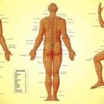 Demonstrat științific: punctele meridionale din corp există