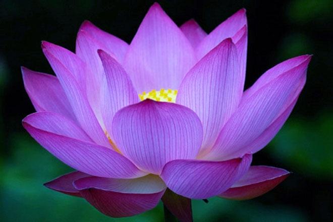 flowerchakra
