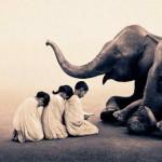 Respirația Pranayama: Ce ne pot învăța elefanții și furnicile despre LONGEVITATE și ENERGIE