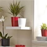 Rolul plantelor de apartament. Află care sunt cele mai potrivite plante pentru casa ta!
